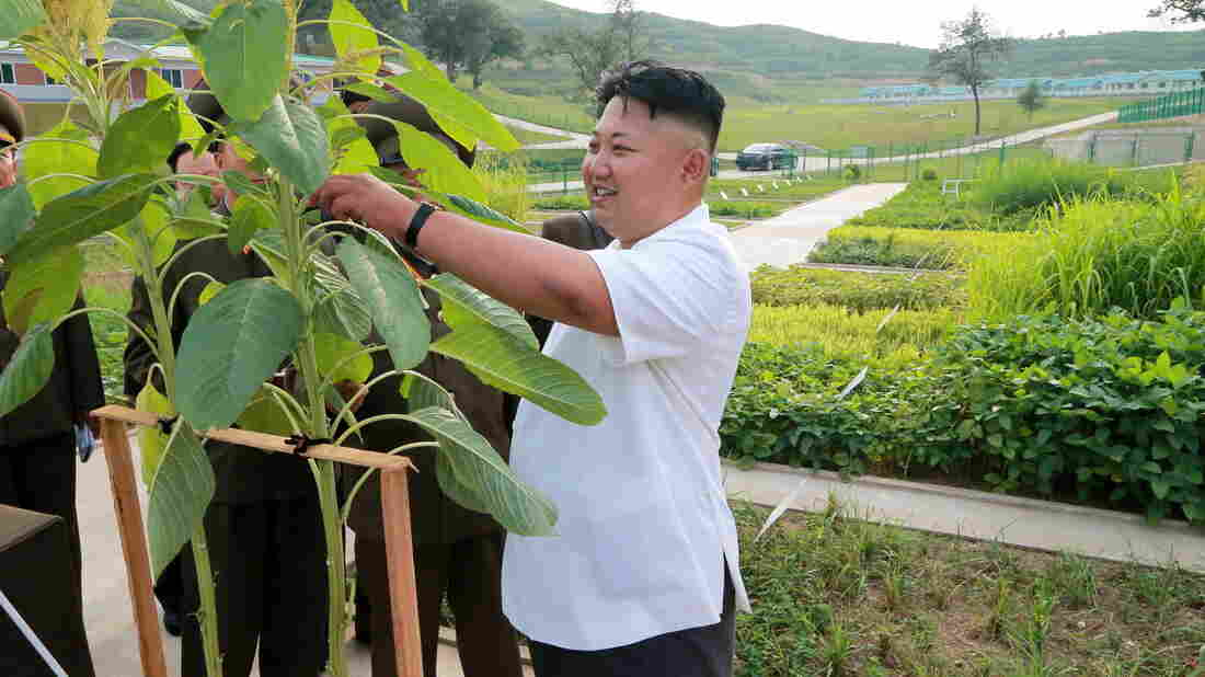 North Korean leader Kim Jong Un visits Breeding Station No. 621 of the Korean People's Army on Aug. 21. He hasn't been seen in public since Sept. 3.