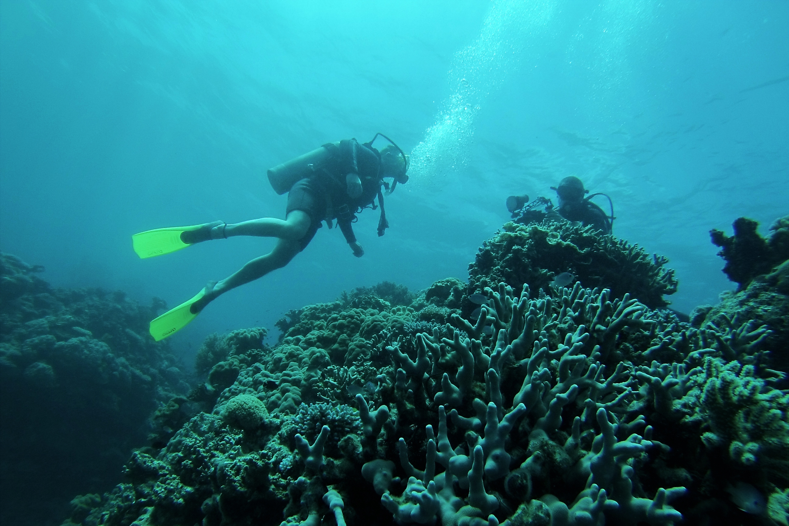 As Great Barrier Reef Ails, Australia Scrambles To Save It