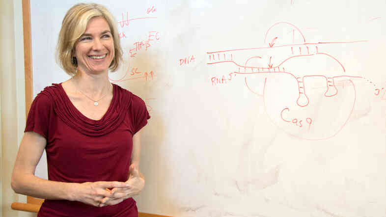 Jennifer Doudna and her colleagues found an enzyme in bacteria that makes editing DNA in animal cells much easier.