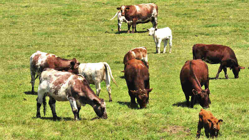 Researchers say there's plenty the beef industry can do to use less land and water and emit fewer greenhouse gas emissions. But producers may need to charge a premium to make those changes.