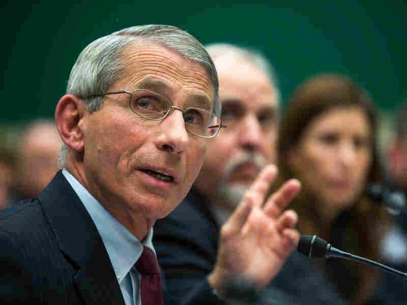 Dr. Anthony Fauci, director of the National Institute of Allergy and Infectious Disease, testifies before a House Energy and Commerce Oversight and Investigations Subcommittee hearing on the US response to the ebola outbreak in D.C., on Oct. 16, 2014.