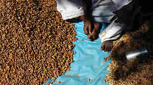 A Balanced Diet For World Food Day: Bugs, Groundnuts And Grains
