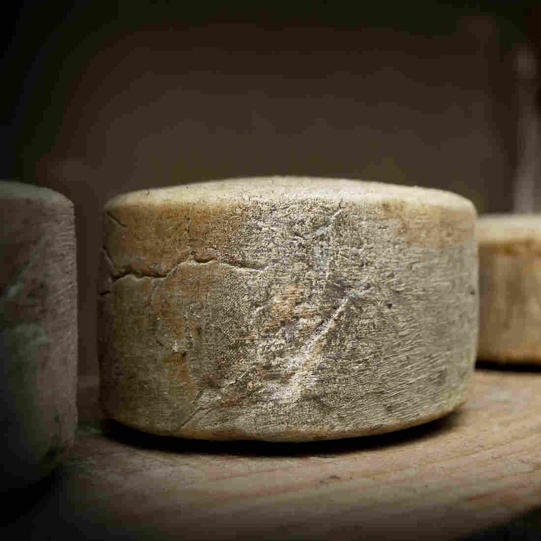 Many artisan cheese producers never pasteurize their milk – it's raw. The milk's natural microbial community is still in there. This microbial festival gives cheese variety and intrigues scientists.