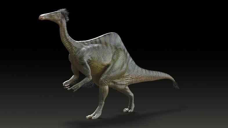 Reconstruction of Deinocheirus mirificus.