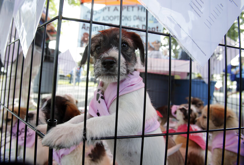 In More Cities, That Doggie In The Window Is Not For Sale : NPR