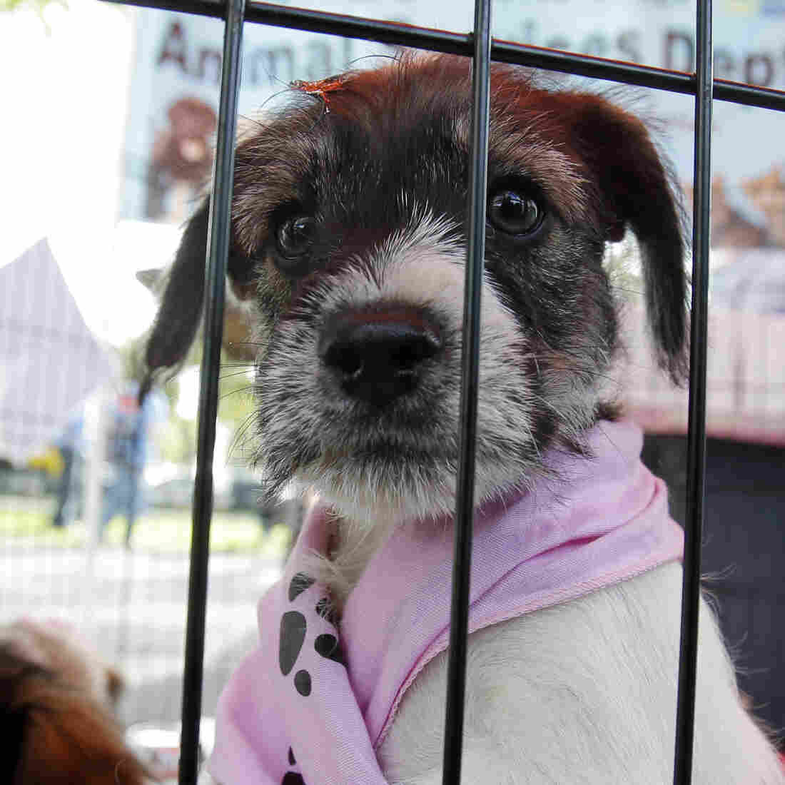 In More Cities, That Doggie In The Window Is Not For Sale
