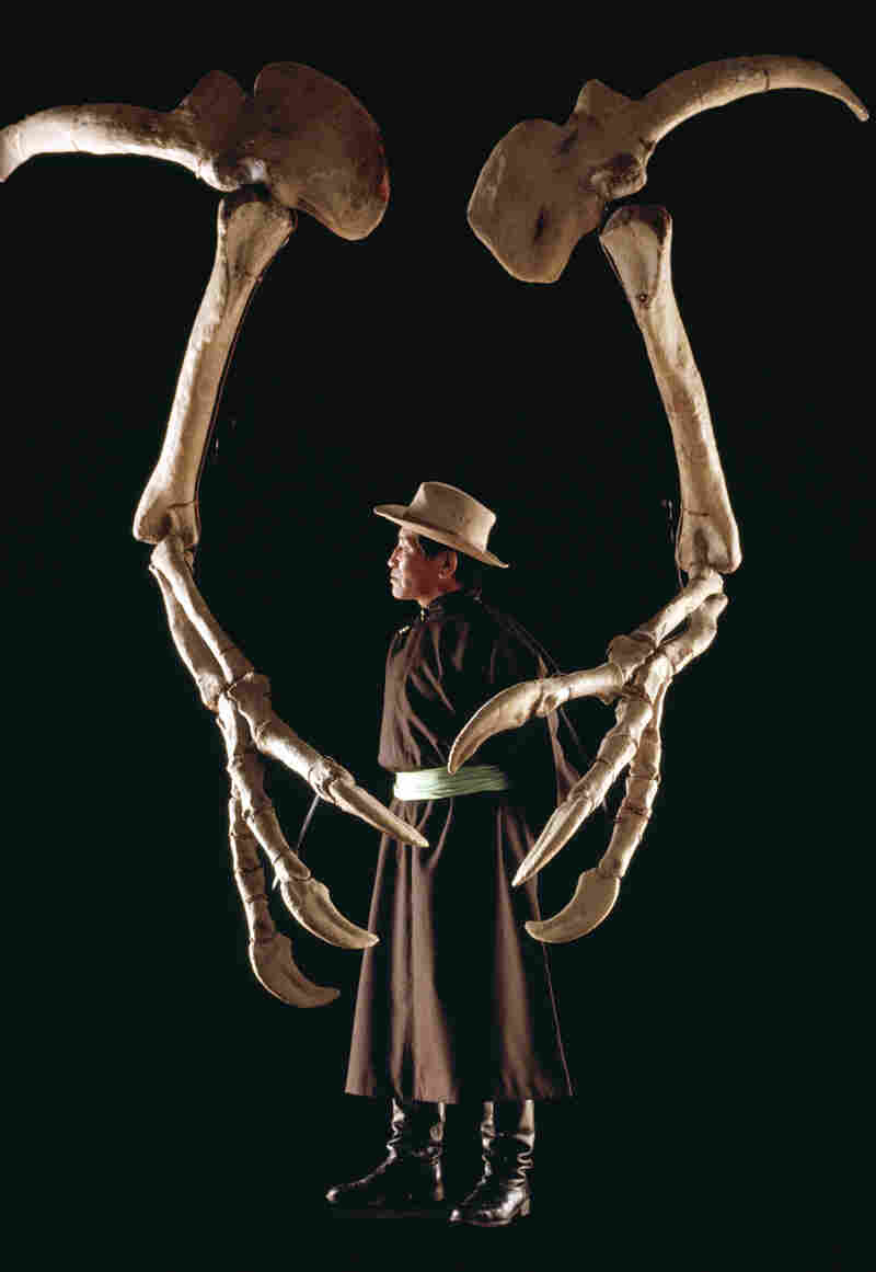 Paleontologist Altangerel Perle, with the Museum of Natural History in Ulan Bator, Mongolia, stands between the forearms of Deinocheirus.