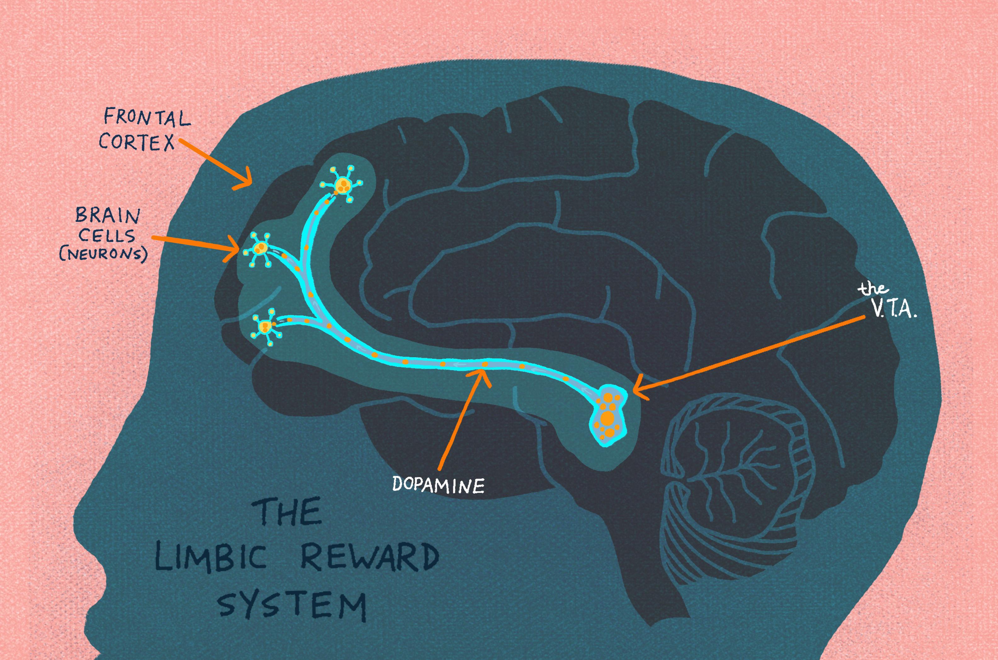 3 Win Nobel Prize In Medicine For Discovering Brain's ...