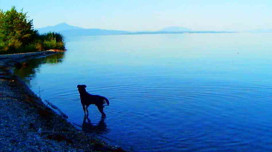 Jean-Luc Godard's dog Roxy appears in his new film, Goodbye To Language.