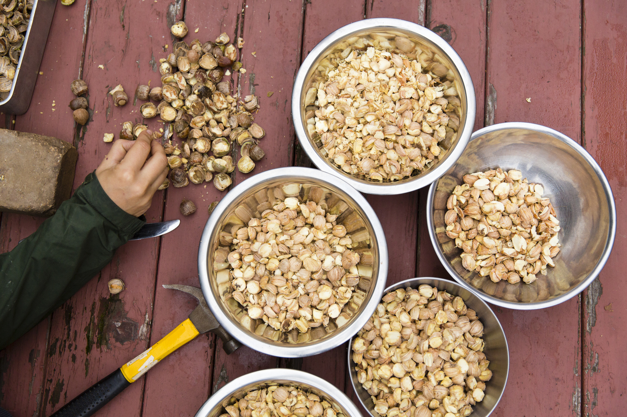 Nutritious Acorns Don't Have To Just Be Snacks For Squirrels