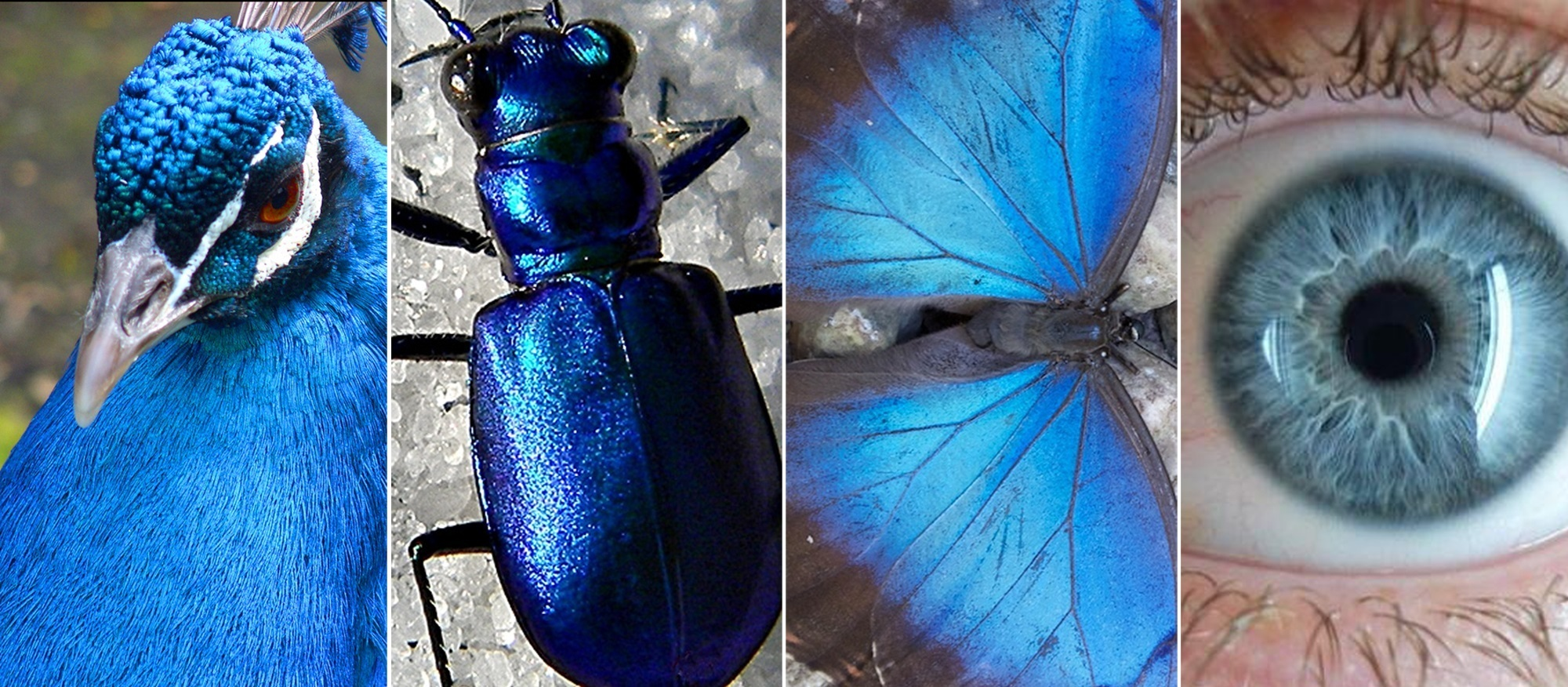 How Animals Hacked The Rainbow And Got Stumped On Blue