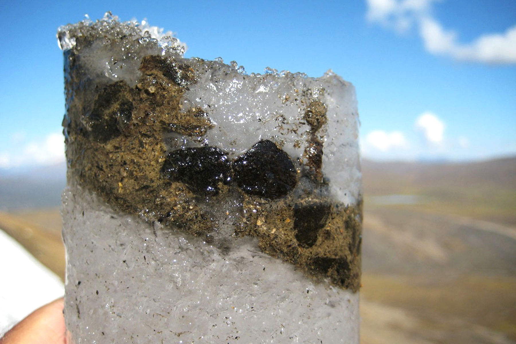 Ancient Viruses Lurk In Frozen Caribou Poo