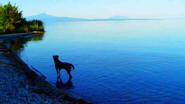 Jean-Luc Godard's dog, Roxy, is prominently featured in Goodbye to Language, wandering through the countryside, conversing with the lake and the river.