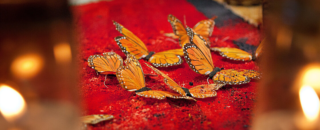Monarch butterfly: These butterflies, which migrate to Mexico each fall, were believed to be the spirits of the ancestors coming to visit.