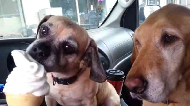 Screen shot from YouTube video of dogs Daisy and Cooper.