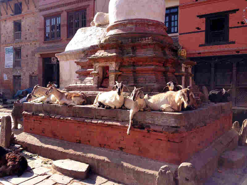 For a drowsy divine goat, where better to nap than on the pedestal of a Buddhist temple.