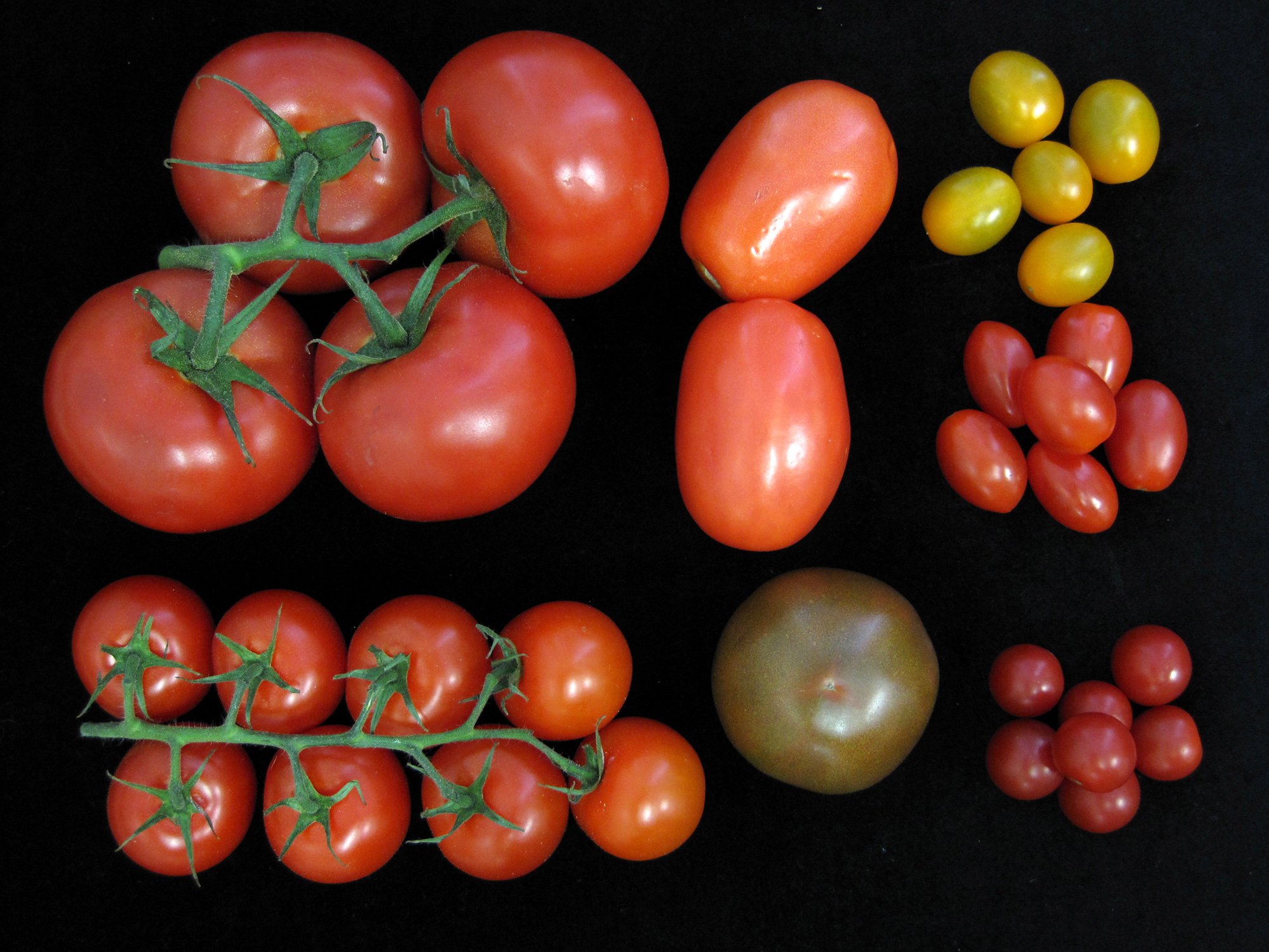 A Non-GMO Way To Get More, Tastier Tomatoes