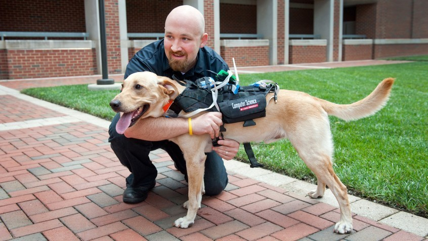Weekly Innovation: Harness Could Allow Dogs, Humans To Communicate