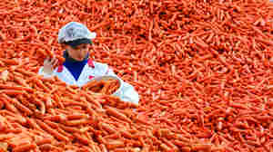 An employee at a frozen foods company in eastern Germany checks carrots for quality.
