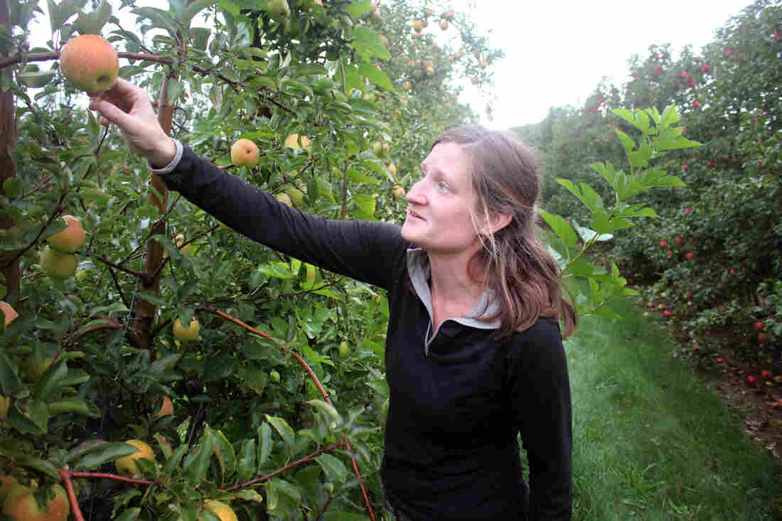 "Sydney Kuhn owns Kuhn Orchards in Cashtown, Pa. ""We've actually had customers at market ask us about SweeTango,"" she says. ""And we explain that it's a club variety, and we are not part of the club, so we cannot grow that apple."""