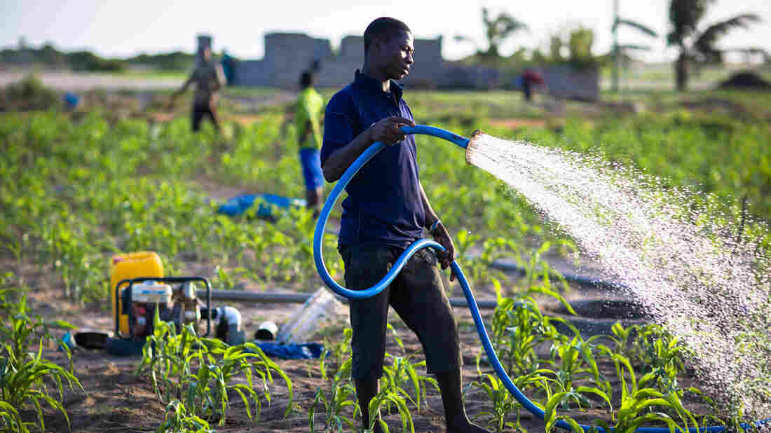 These farmers grow maize, onions and other vegetables in a city in Ghana. They use groundwater to irrigate their crops.