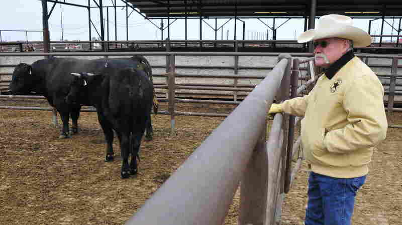 Chief Agent Jerry Flowers looks over cattle at OKC West Livestock Market in El Reno, Oklahoma on Nov. 12, 2014. Cattle rustlers will often try to sell off their stolen cows at lives
