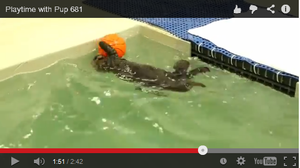 WATCH: Orphaned Sea Otter Pup Has Snack, Playtime
