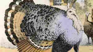 The 3-Bird Turducken Has Nothing On This 17-Bird Royal Roast