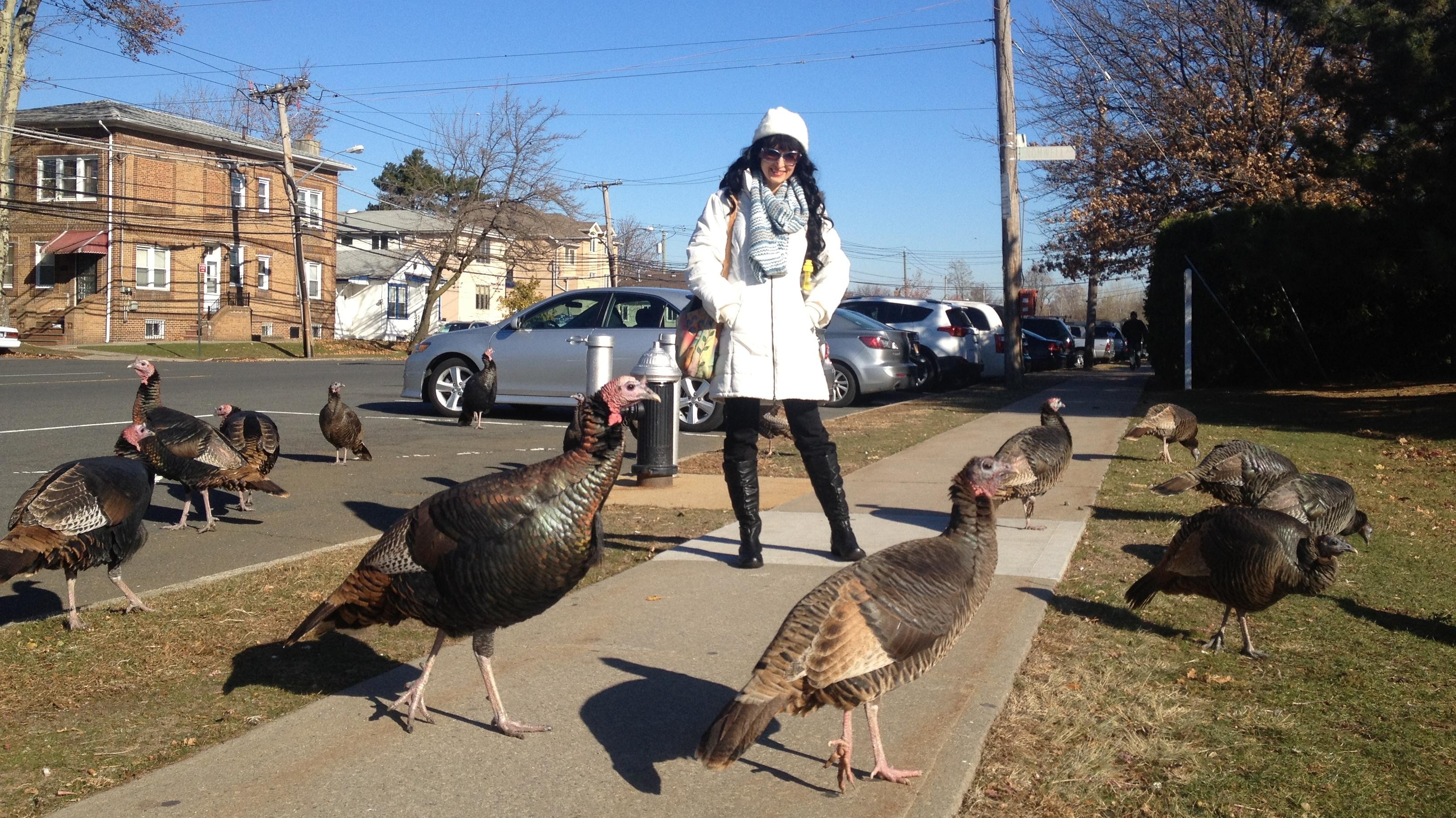 Wildlife Activists Try To Save Staten Island's Wild Turkeys