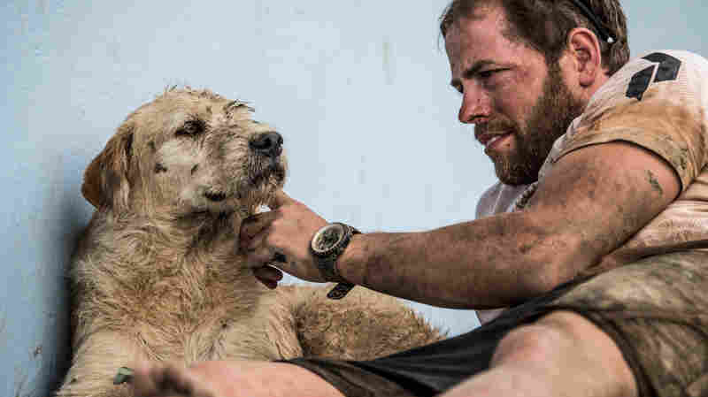 Swedish endurance athlete Mikael Lindnord managed to get Arthur, a dog his team befriended in Ecuador, to come home with him.
