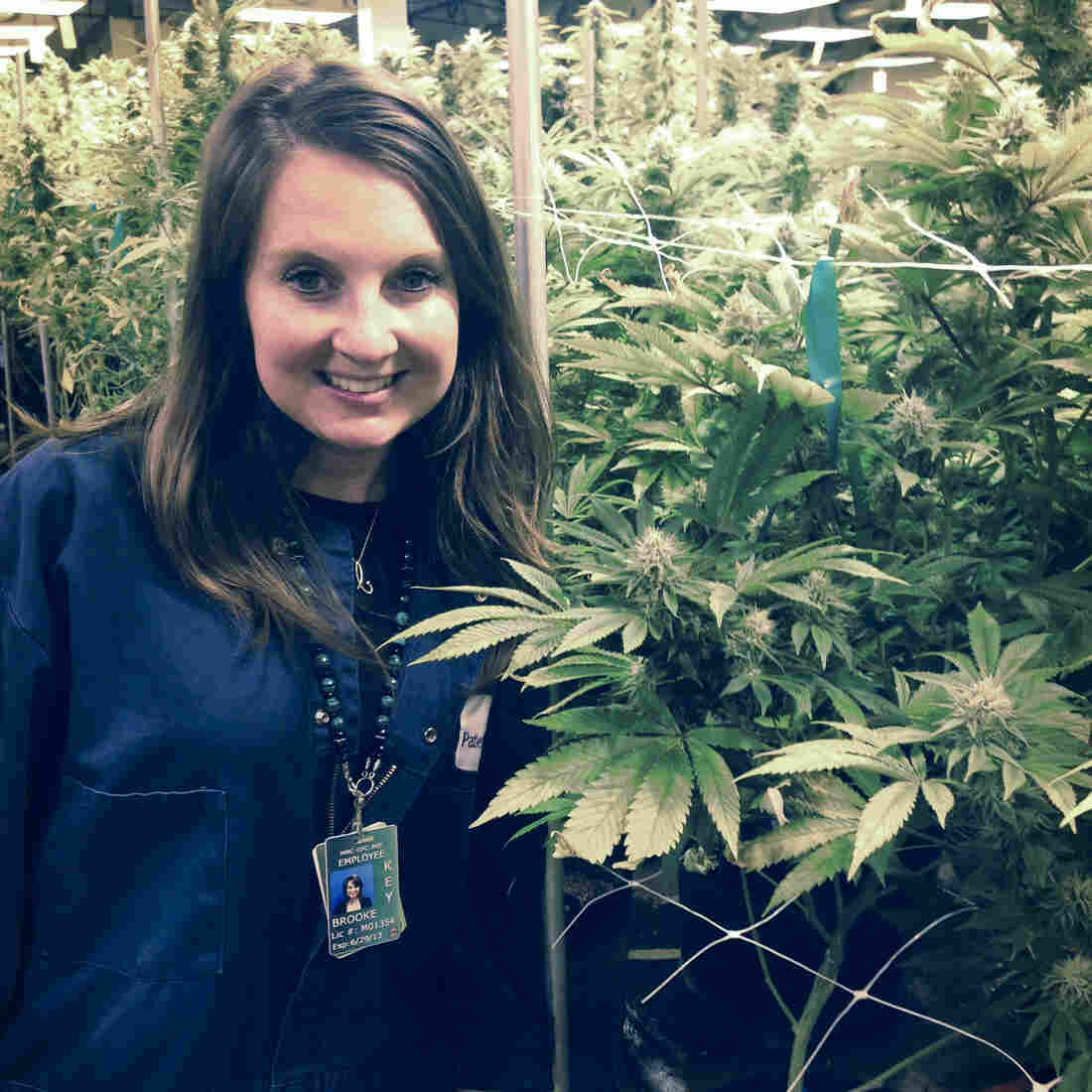 Colorado's Pot Industry Looks To Move Past Stereotypes