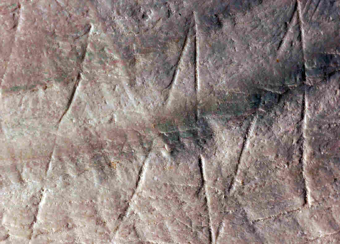 Detail of the zigzag engraving on the fossil Pseudodon shell.
