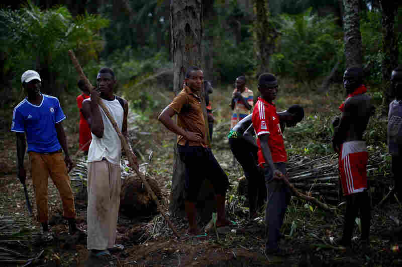 Workers clear the jungle around the school being turned into a community care center in northern Sierra Leone.