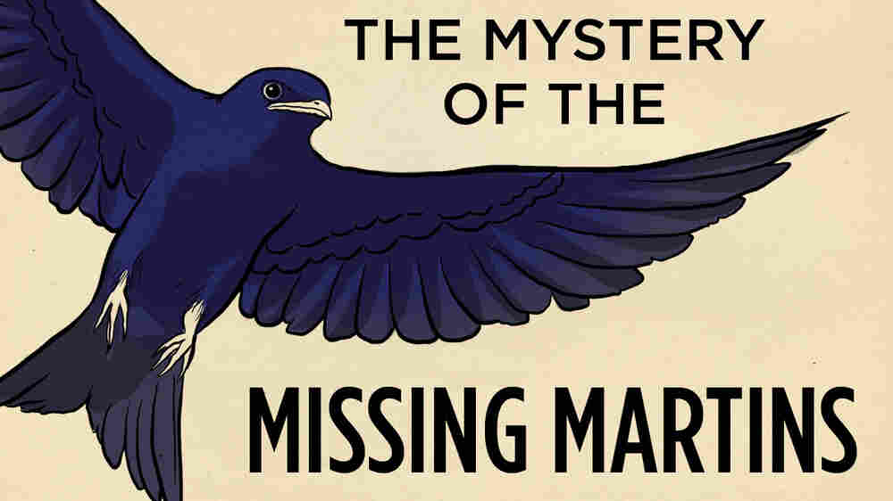 The Mystery Of The Missing Martins