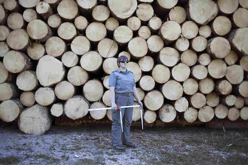 Once a forest ranger marks a suitable tree, lumberjacks chop it down and cart it to a lumberyard like this one in the Fiemme Valley, where the spruce is milled into sections.