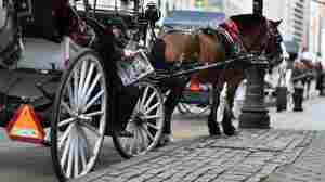 New York City Council Will Weigh Ban On Horse-Drawn Carriages