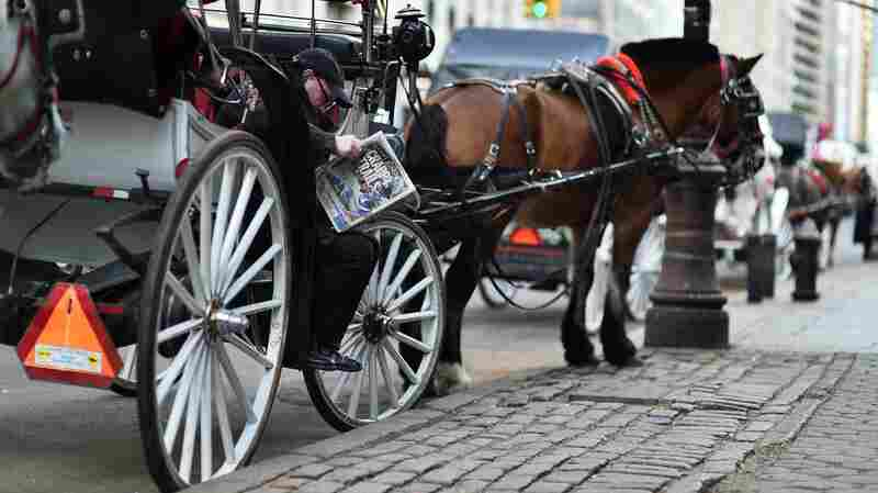 A horse-drawn carriage operator waits for riders near Central Park in New York on October 20, 2014. Mayor Bill de Blasio is backing legislation that would ban such carriages in 2016.