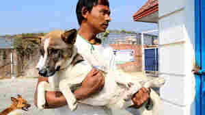 When A Stray Dog's In Trouble, Katmandu's Canine Rescuers Jump To It