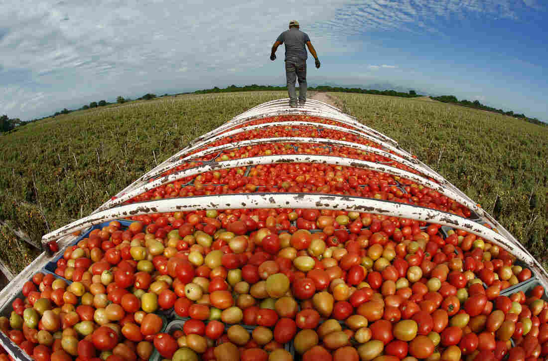 At the end of the day, Roma tomatoes are ready for transport in Cristo Rey in the state of Sinaloa. Half the tomatoes consumed in the U.S. come from Mexico.