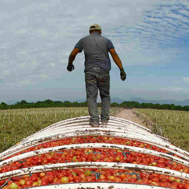 Mexican Megafarms Supplying U.S. Market Are Rife With Labor Abuses