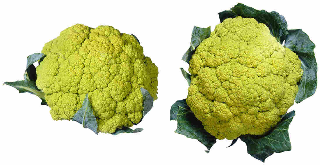 Broccoflower was originally grown in Holland and hit the U.S. market in 1989. It's remained a relatively specialty item since then, but culinary experts say it may soon become more widely available.
