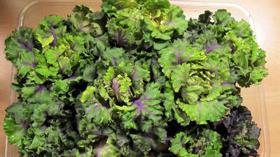 Kalettes Broccoflower And Other Eye Popping Vegetables For 2017