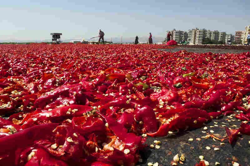 Raking in the heat. Acres of drying peppers, Urfa, Turkey.