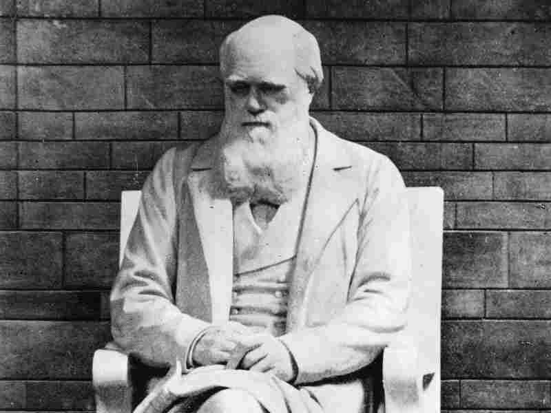 Charles Darwin, perhaps best known for his work on evolution, died at the age of 73 in 1882. He would not have been a candidate for the Darwin Awards.