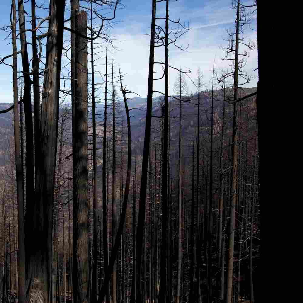 The King Fire burned 100,000 acres in the Eldorado National Forest in Northern California — 50,000 of those acres in one day. Now the danger is mudslides.