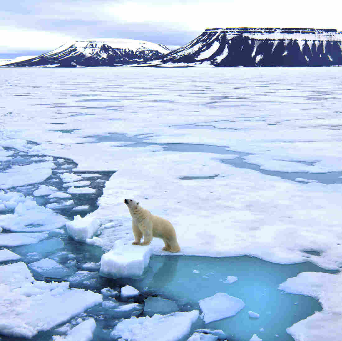 Arctic Is Warming Twice As Fast As World Average