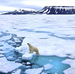 Arctic Is Warming Twice As Fast As Anyplace Else On Earth