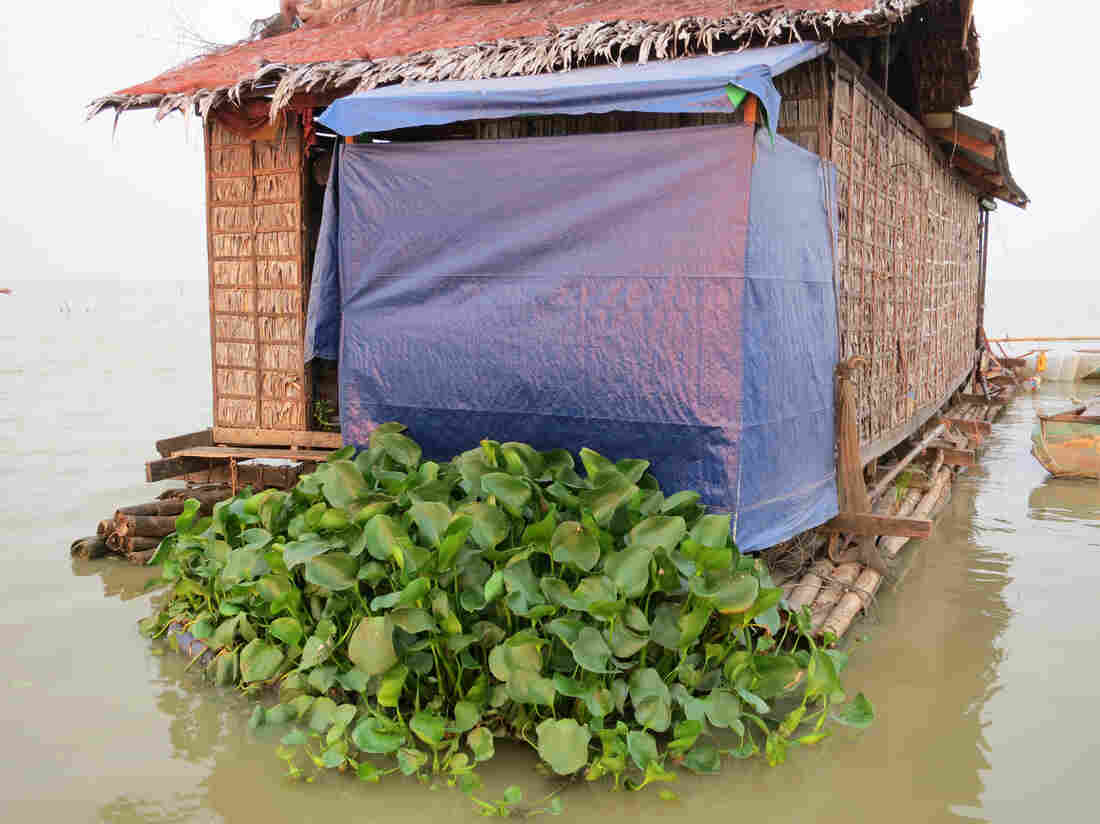 A pod to pick up your poo: The Handy Pod features floating hyacinth plants placed underneath a houseboat's latrine. The blue tarp offers privacy.