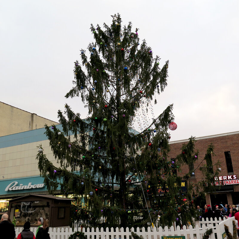 Around the Nation - Montreal's Tall, Scrawny Christmas Tree Evoking Charlie Brown