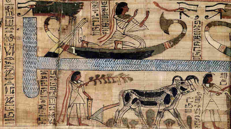 Farming helped fuel the rise of civilizations, but it may also have given us less robust bones.